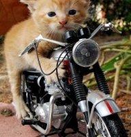 YeOldeStonecat