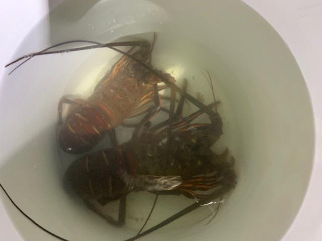 lobster4.jpg